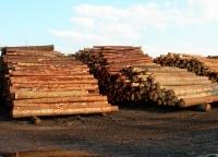 Eksport drewna stał się problemem dla polskich firm
