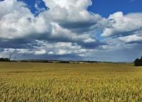 Co rolnik może sprzedać bez zakładania firmy?